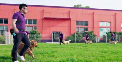 518彩网宠物店加盟