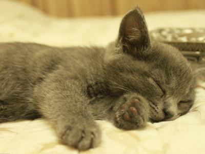 猫科动物的胡须或触须是精密的触觉