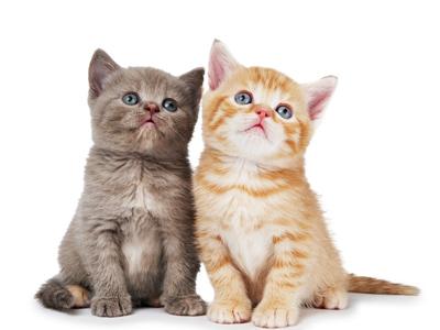 猫咪不好好吃饭怎么办_第1页_海上文心阁_人文_西祠