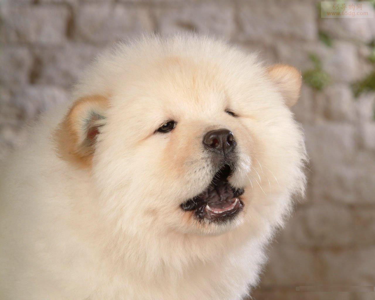 狗狗可爱的萌旳图片