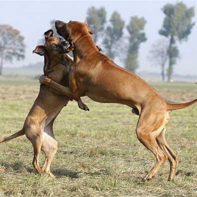动物挑衅眼神动态图片