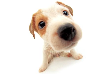 【宠物知识】夏天狗狗不爱吃东西原因