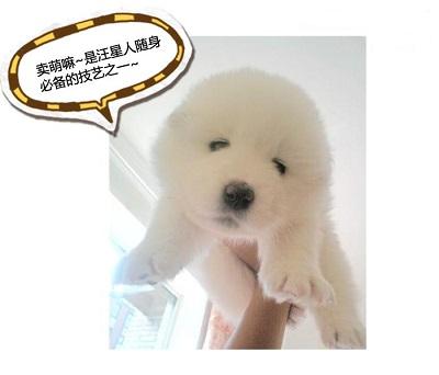 刚出生的小狗怕热吗_狗狗怕热吗?