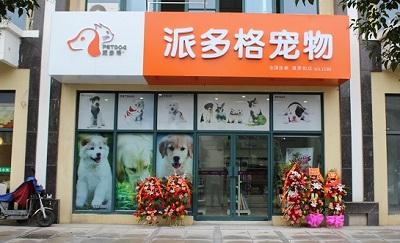 派多格寵物美容學校:想作為一名寵物美容師,學習方法你選對了嗎?